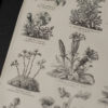 Гравюра Альпийские растения