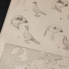 Гравюра Почтовые голуби