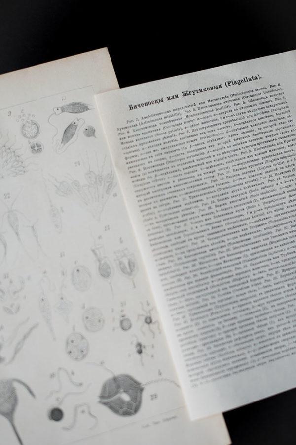 Гравюра Биченосцы или жгутиковые
