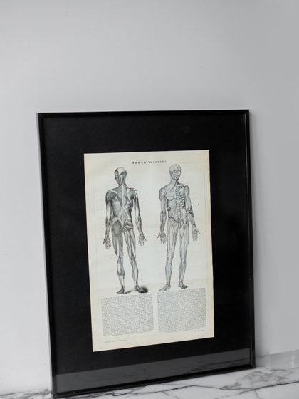 Гравюра Мышцы человека